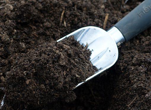 Đất ươm cây